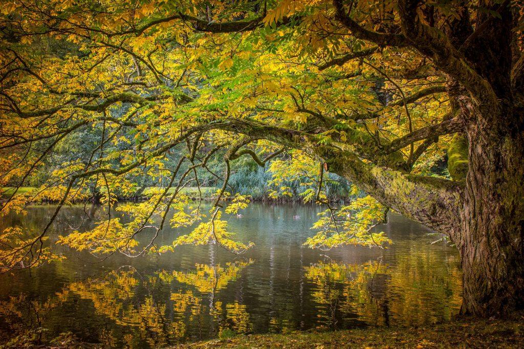 https://pixabay.com/nl/herfst-boom-gouden-herfst-stemming-2722844/